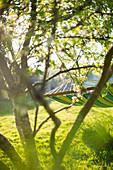 Hammock and tree in sunny idyllic garden