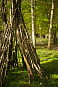 Branch teepee in woods