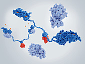 Activated cAMP-dependent protein kinase molecule