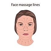 Face massage lines, illustration