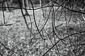 Close up branches