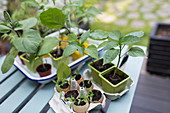 Tiny potted plants on patio table