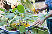 Woman watering potted plants with spray bottle