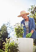 Senior woman in straw hat gardening