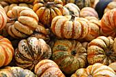 'Sweet Dumpling' pumpkins