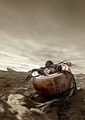 Venera 4 landing on Venus, illustration