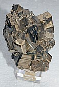 Cluster of pyrite cubes