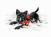 Cute black puppy with red bow, illustration