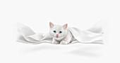 Cute white kitten, illustration