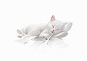 Cute white kitten asleep, illustration