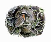 Robin with nest in overturned pot, illustration