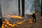 Controlled forest fire
