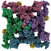 Ryanodine receptor complex, illustration