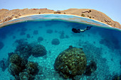 Snorkeler, Komodo Island, Komodo National Park, Indonesia