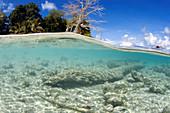 Tropical beach, Sipadan Island, Malaysia