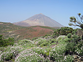 Teide volcano, Tenerife, Canary Islands