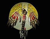 Warriors Shield, Crow Tribe