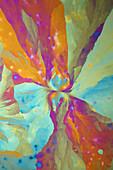 Aluminum Potassium Sulphate and Ammonium, Polarized Light Microscopy