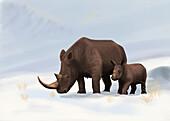 Woolly Rhinoceros (Coelodonta antiquitatis) Female and Calf