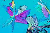 Venlafaxine Crystals, LM