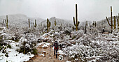 Hiking Sabino Canyon in Snow