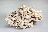 Fossilized Marine Tube Worm Casts