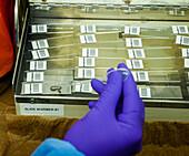 Mycobacterium tuberculosis Research