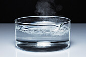Sodium reacts with water, 2 of 4
