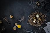 A nest with quails' eggs