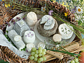 Assortment of Goat Cheeses; Bucheron, Petit Chevre and Aged Goat Cheese from Spain