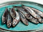 Cetara anchovies