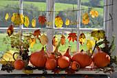 An autumnal arrangement on a windowsill
