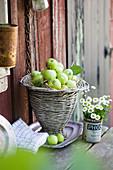 Frisch gepflückte grüne Äpfel