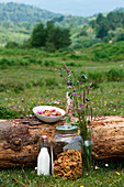 Bowl with yummy cinnamon cereal and glass bottle of milk placed on trunk in countryside for breakfast