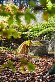 Basket on autumn leaves