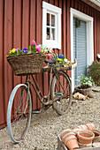 Altes Fahrrad mit Frühlingsblumen an der Hauswand