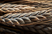 Black emmer wheat