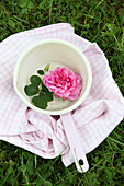Pink rose and rose leaves in saucepan