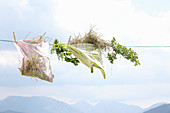 Hay in cloth bags and herbs on clothesline