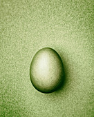 Lime green Easter egg on a lime green background