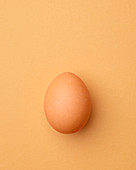 Brown chicken egg on a light orange background