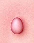Pink Easter egg on a pink background
