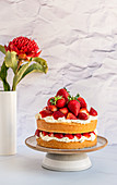 Strawberry and Whipped Cream Cake with Textured Background