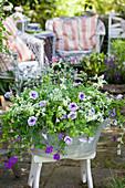 Zinkwanne mit Petunien, Verbene, Zauberschnee und Strukturpflanze