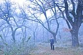 Man in oak forest