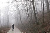Man in beech forest