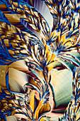 Salicin anti-inflammatory drug, polarised light micrograph