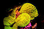 Coral reef fluorescing at night