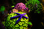 Coral reef and starfish fluorescing at night