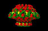 Bacteriophage T7 portal protein, computer model